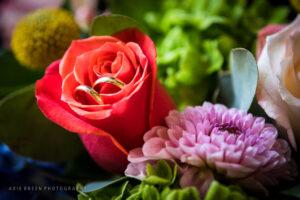 wedding, Boston, Cambridge, Multicultural Arts Center, Centanni Park, wedding photographer